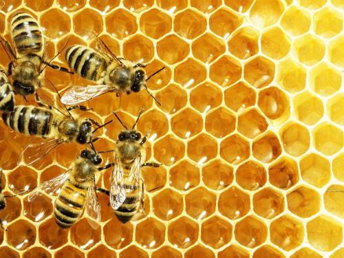 las-abejas-se-enfrentan-con-una-amenaza-global