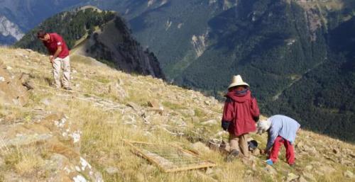 el-cambio-climatico-altera-la-vegetacion-de-alta-montana-en-el-pirineo