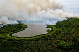 Depredadores ambientales dominan el gobierno en Brasil